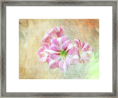 Springy Amaryllis Framed Print by Terry Davis