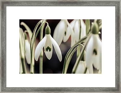 Spring Framed Print by Andreas Levi