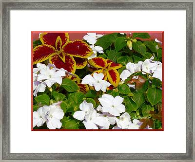 Framed Print featuring the pyrography Spring Annuals by Elly Potamianos