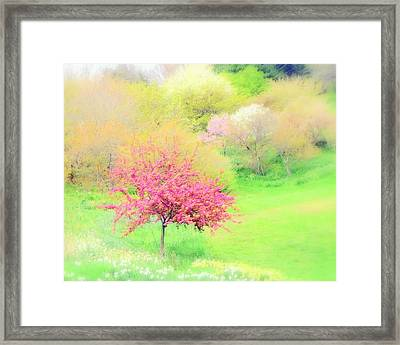 spring at Highland Park  Framed Print