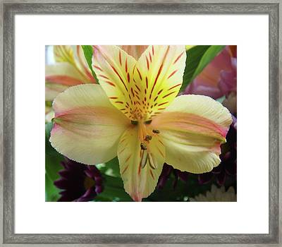 Spring At It's Best Framed Print by Patricia M Shanahan