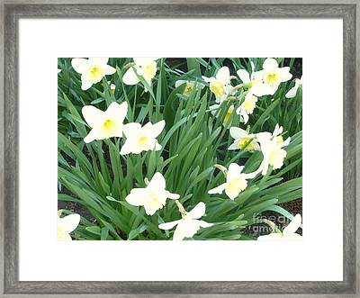 Spring At Last Framed Print by Barb Montanye Meseroll