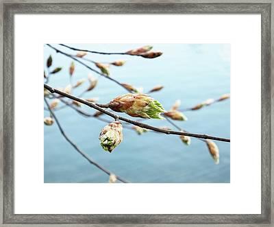Spring At The Lake Framed Print by Karen Stahlros