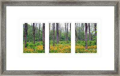 Spring At Walnut Plantation Framed Print by Steve Gass