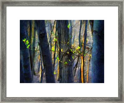 Spring Awakening In The Forest Framed Print
