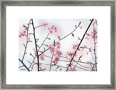 Spring Awakening Framed Print by Eena Bo