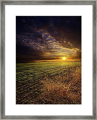 Spring Awakening Framed Print by Phil Koch
