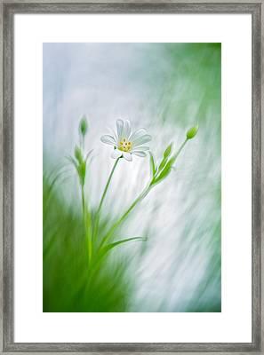 Spring Ballet Framed Print