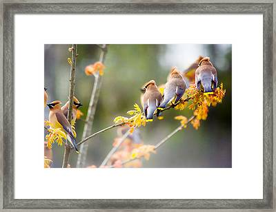 Spring Beauties  Framed Print by Parker Cunningham