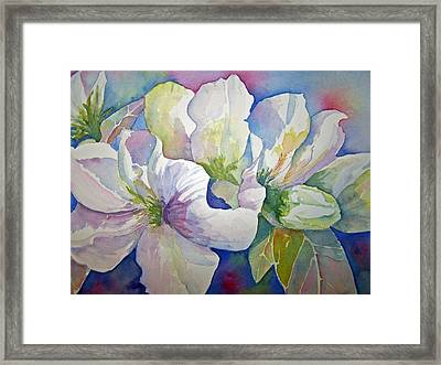 Spring Beauty Framed Print by Sandy Collier
