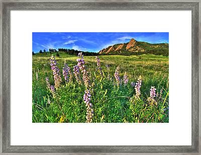 Spring Beauty Framed Print by Scott Mahon