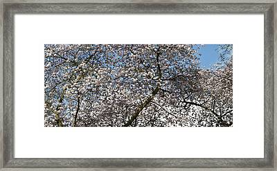 Spring Beauty Framed Print by Tim Gainey