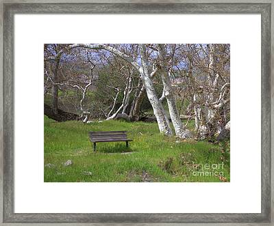 Spring Bench In Sycamore Grove Park Framed Print