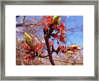 Spring Bloom #1 Framed Print