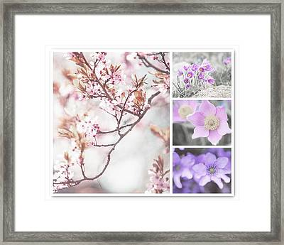 Spring Bloom Collage 1. Shabby Chic Collection Framed Print