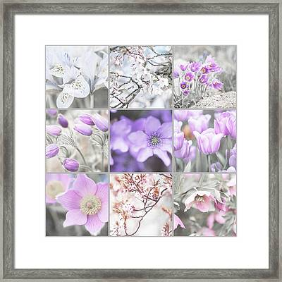 Framed Print featuring the photograph Spring Bloom Collage. Shabby Chic Collection by Jenny Rainbow