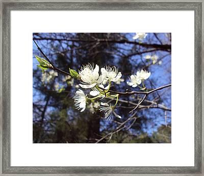 Spring Blooms Framed Print by Jennifer Coleman