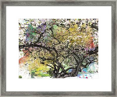 Spring Blooms Framed Print by Leslie Hunziker