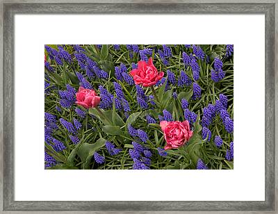 Framed Print featuring the photograph Spring Blooms by Phyllis Peterson