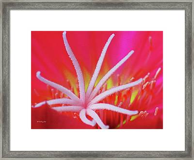 Spring Blossom 19 Framed Print by Xueling Zou