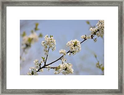 Spring Blossom Framed Print by Gwen Allen