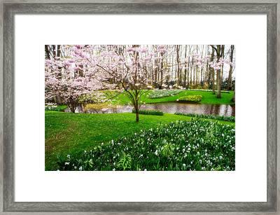 Spring Blossom In Keukenhof Garden Framed Print