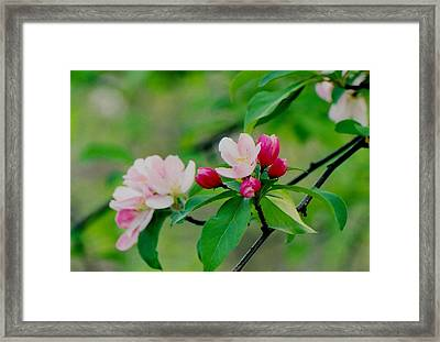 Spring Blossom Framed Print by Juergen Roth