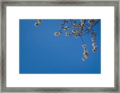 Spring Blossom L Framed Print by Andy Smy
