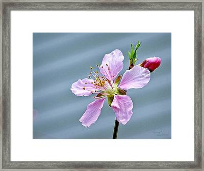 Spring Blossom Framed Print by Ludwig Keck