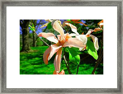 Framed Print featuring the photograph Spring Blossom Open Wide by Jeff Swan