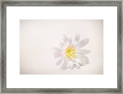 Spring Blossom Framed Print by Scott Norris