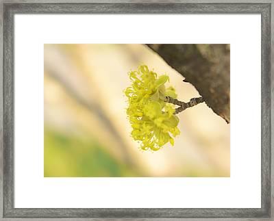 Spring Blossom  Framed Print by Art Spectrum