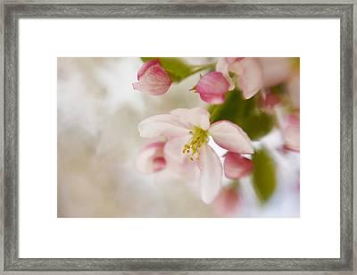 Spring Blossom Whisper Framed Print
