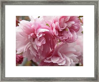 Spring Blossoms #1 Framed Print