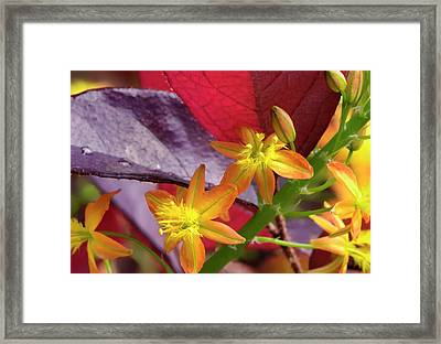 Spring Blossoms 2 Framed Print by Stephen Anderson