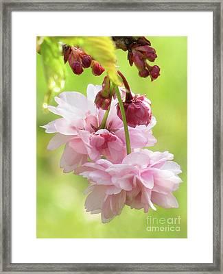Spring Blossoms 8 Framed Print