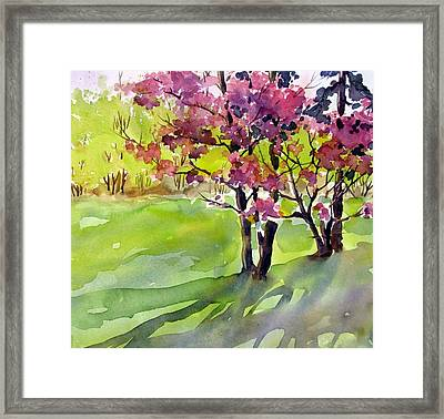 Spring Blossoms Framed Print by Chito Gonzaga