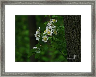 Spring Blossoms Framed Print by Deborah Johnson