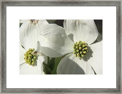 Framed Print featuring the photograph Spring Blossoms by Diane Merkle