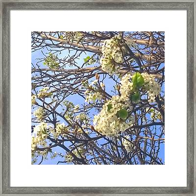 #spring #blossoms Have Arrived :-) Framed Print