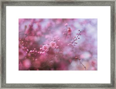 Spring Blossoms In Their Beauty Framed Print