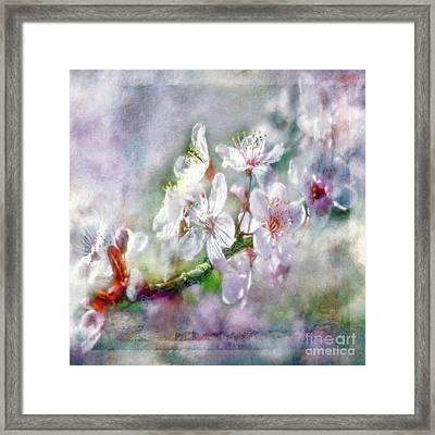 Spring Blossoms Framed Print by Jean OKeeffe Macro Abundance Art