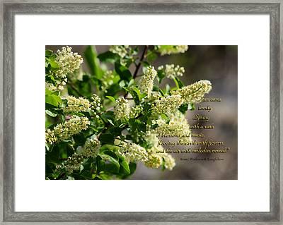 Spring Blossoms Framed Print by Kae Cheatham