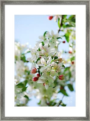Framed Print featuring the photograph Spring Blossoms  by Lila Fisher-Wenzel