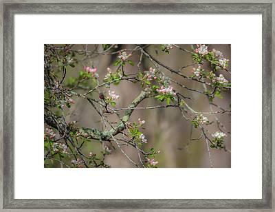 Spring Blossoms 2 Framed Print