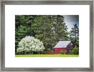 Spring Blossoms On The Farm Framed Print