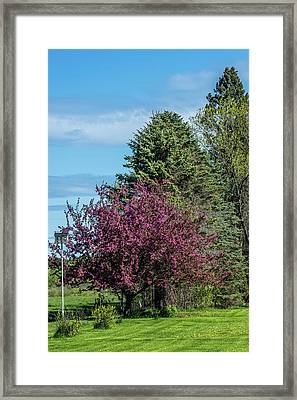 Framed Print featuring the photograph Spring Blossoms by Paul Freidlund