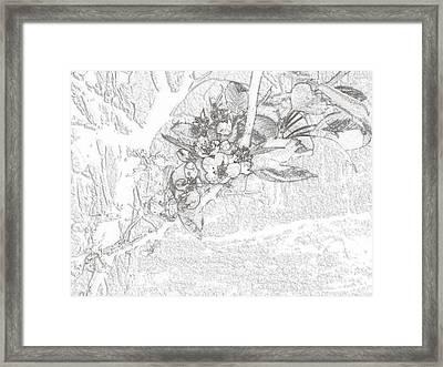 Spring Blossums Framed Print