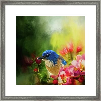 Spring Blue Jay Framed Print