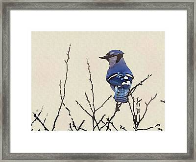 Framed Print featuring the digital art Spring Bluejay by Shelli Fitzpatrick